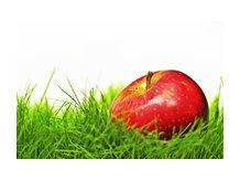 Оптовые поставки фруктов и овощей